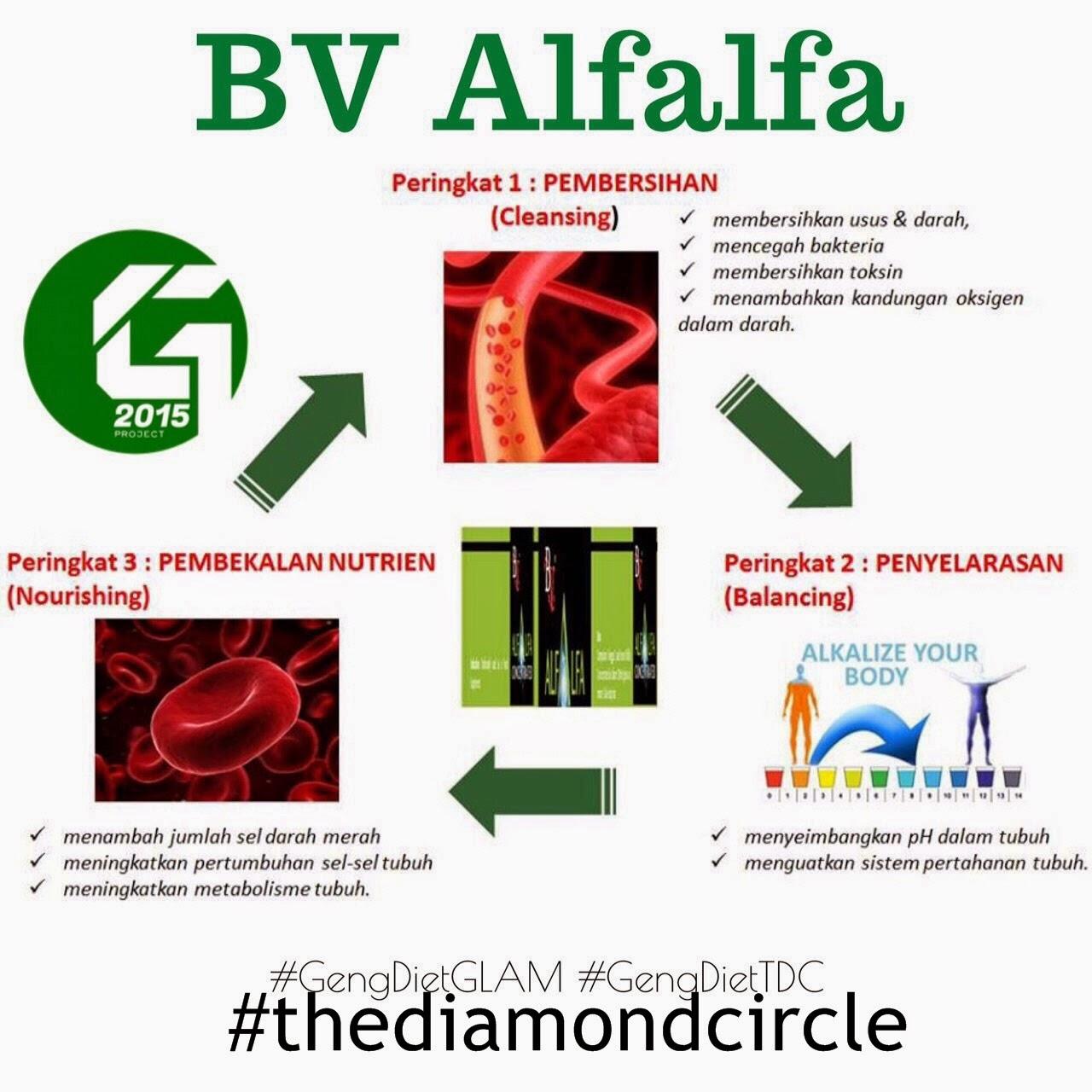 BV Alfalfa