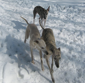 Winter Whippets