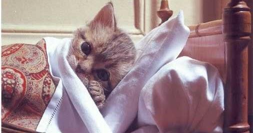 Al Banjari Jooozzz Pertolongan Pertama Pada Kucing Sakit