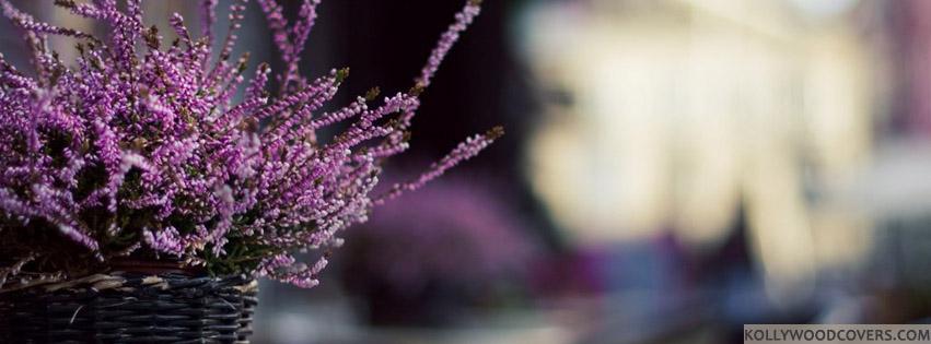 Facebook Timeline Covers Lavender Basket Nature