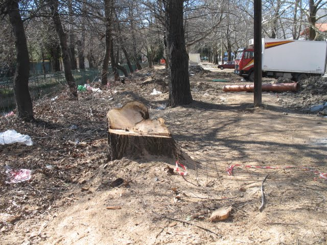 Ρημάξανε τα δέντρα στο παζάρι