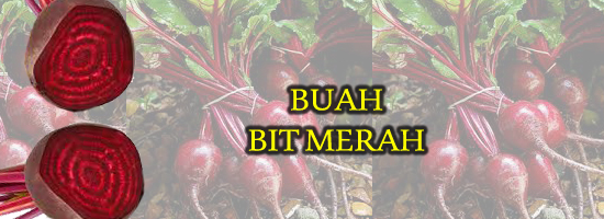buah bit merah, menanam buah bit