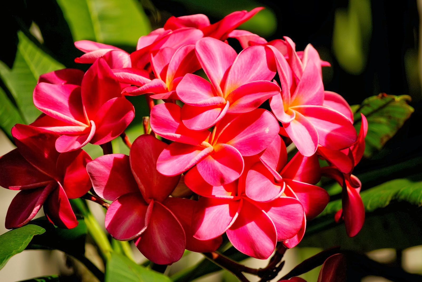 Blok888: Top 10 Most Beautiful Flowers in the world 2