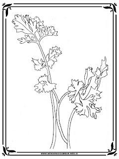 gambar sayur seledri untuk mewarnai