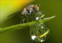 biodiversidade, água, ecologia