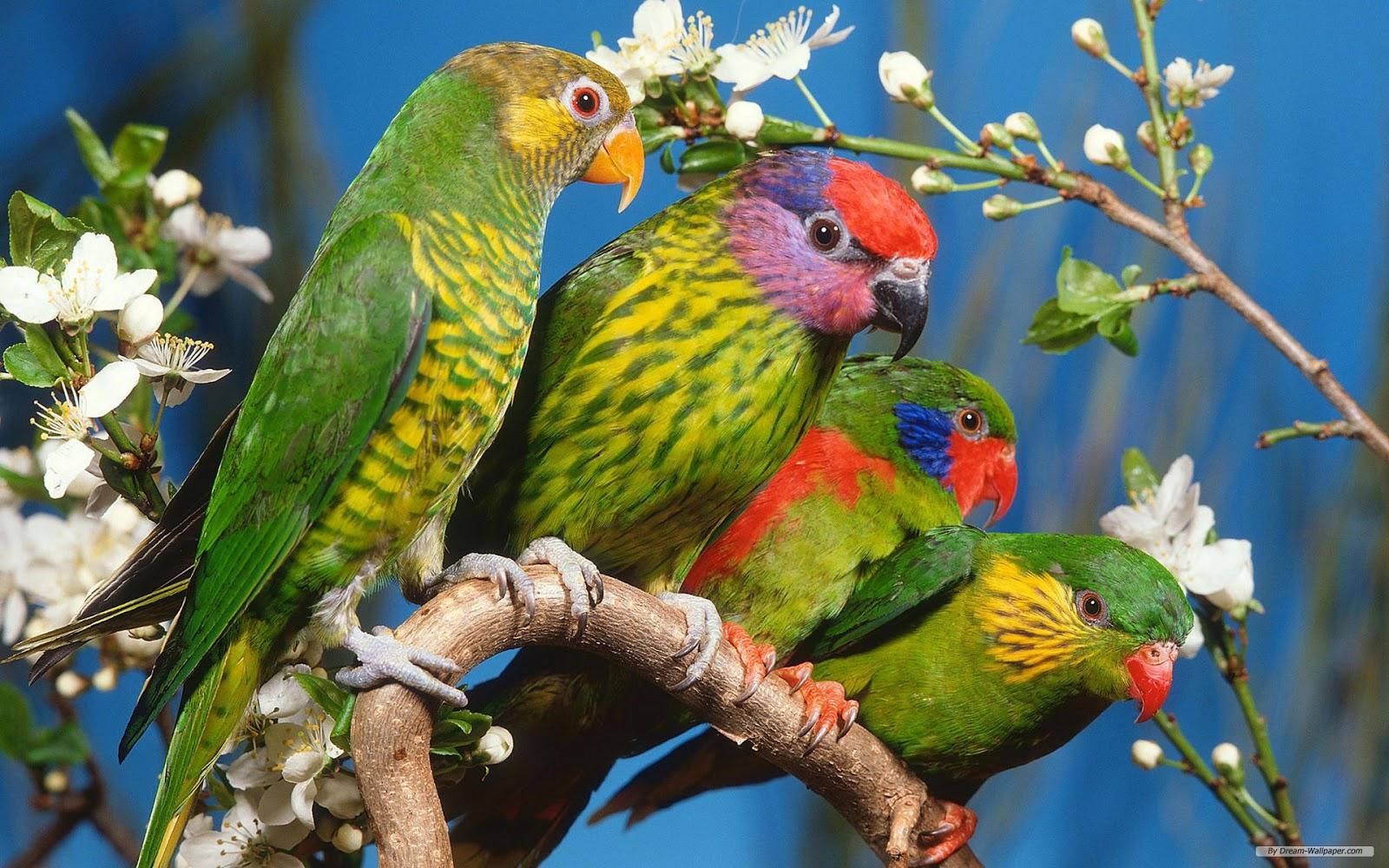 http://1.bp.blogspot.com/-h71hE3OgqyA/UaGiOllnbHI/AAAAAAAAFGk/PHUZ0s58lWU/s1600/bird1.jpg