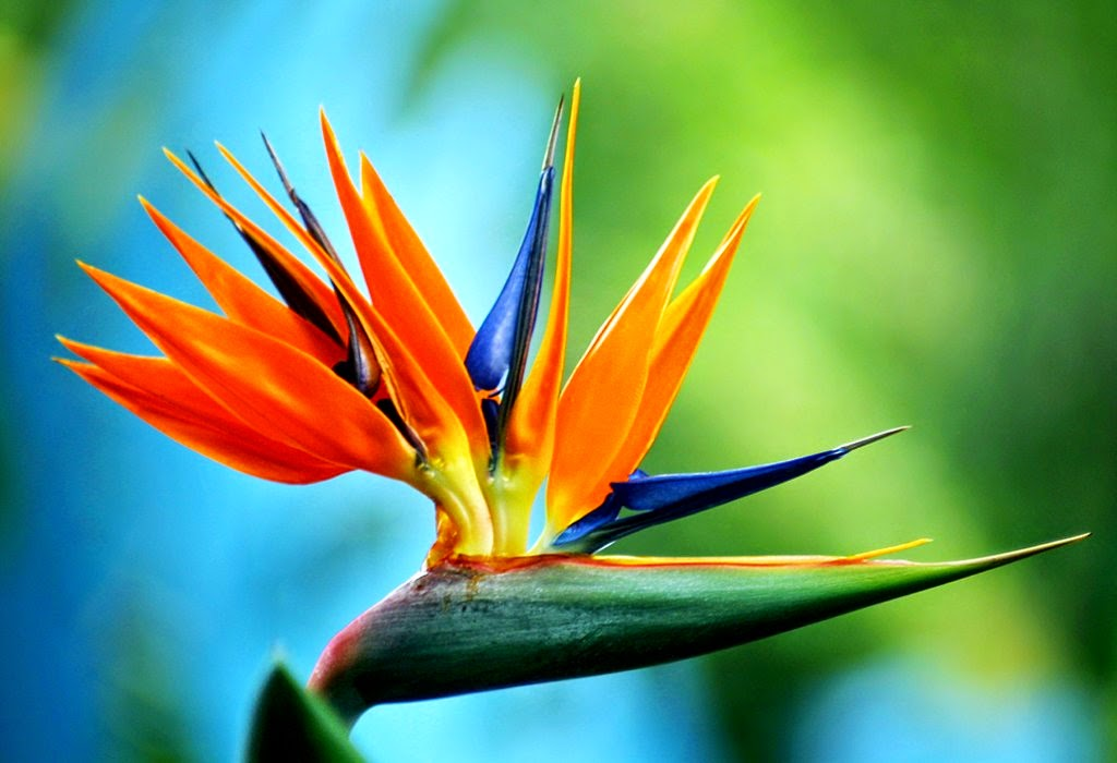 Top 10 Most Beautiful Flowers in the World | Mathias Sauer