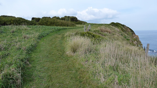 grass track on cliff top on george bass coastal walk