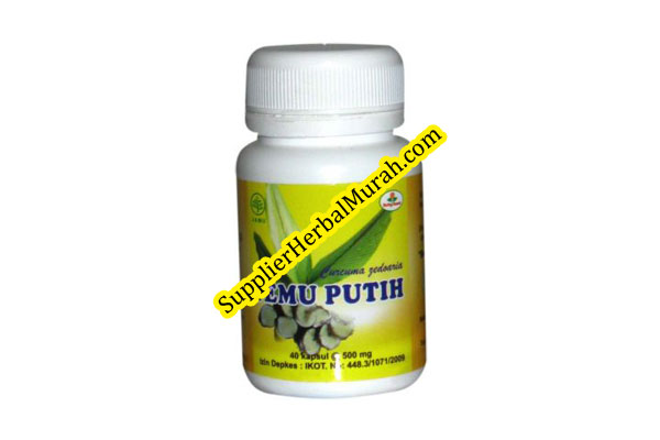 Temu putih herbal insani