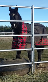 Another other horse