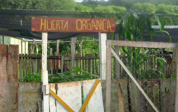 Huerta Orgánica Escolar