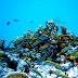 Pérdida de biodiversidad animal amenaza a la humanidad