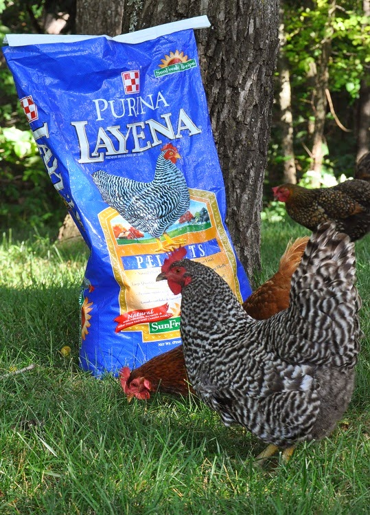 Chickens Repurposed Feed bag Tote