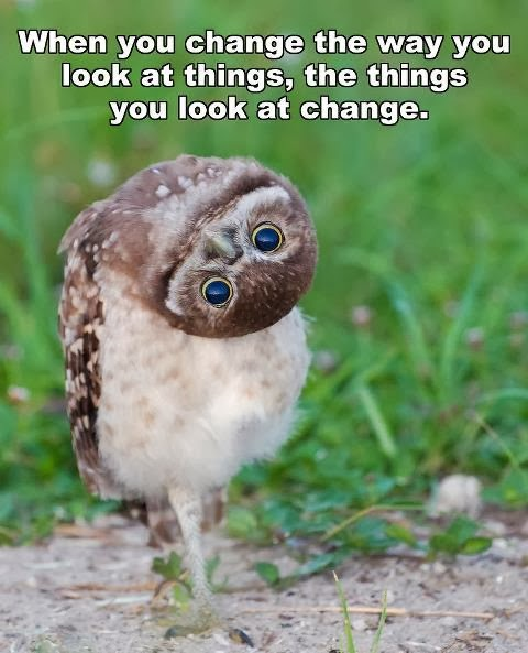 just change the way you see things owl with cocked head photo image