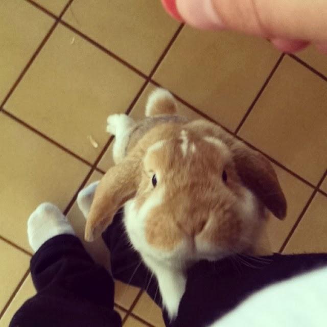 Funny animals of the week - 21 February 2014 (40 pics), rabbit hugging human leg