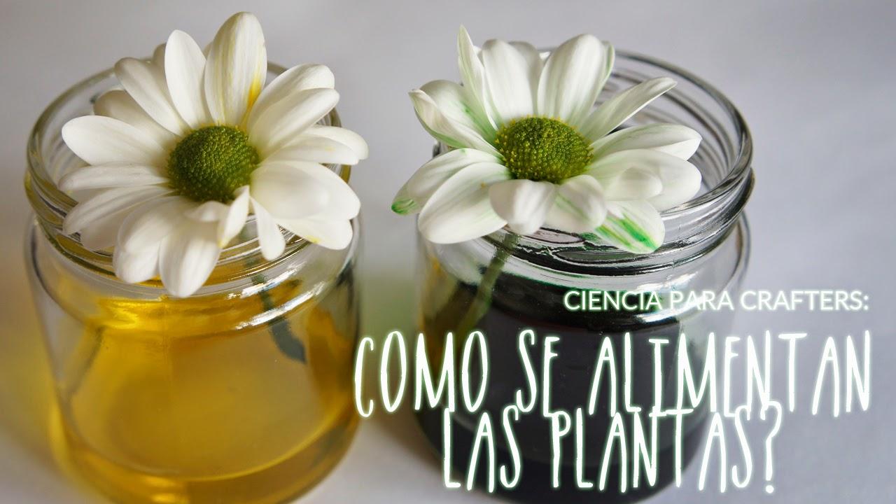 Fieltropiezos diy ciencia para crafters como se for Como se llaman las plantas ornamentales