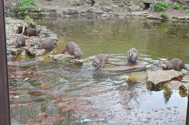 Dudley Zoo and Castle Otters