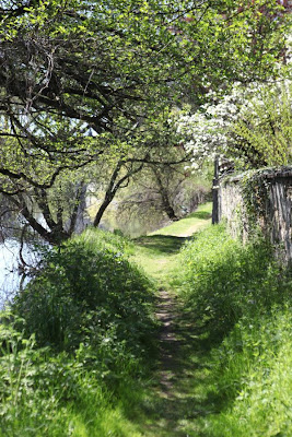 Riverside path in spring