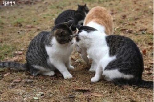 foto unik kucing cemburu