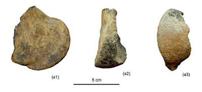 Tibet mammal fossil