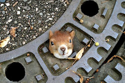 Read the BARNET CORPORATE PLAN, or the stuck squirrel gets it.
