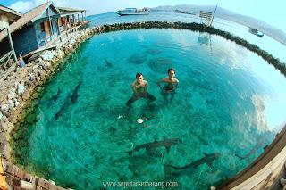 Berenang bersama diantara ikan hiu