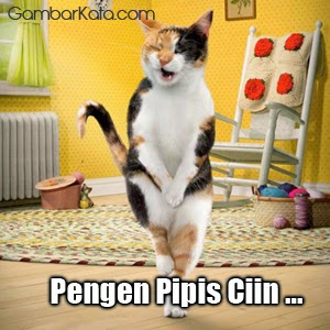 Kumpulan Gambar Lucu Kucing Ucapan Gambar