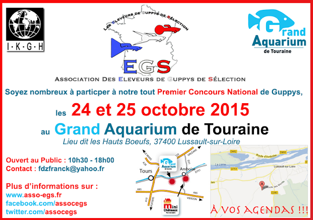 championnat de France de guppy au grand aquarium de Touraine les 24 & 25 octobre 2015 EGS-Concours-National-Guppy