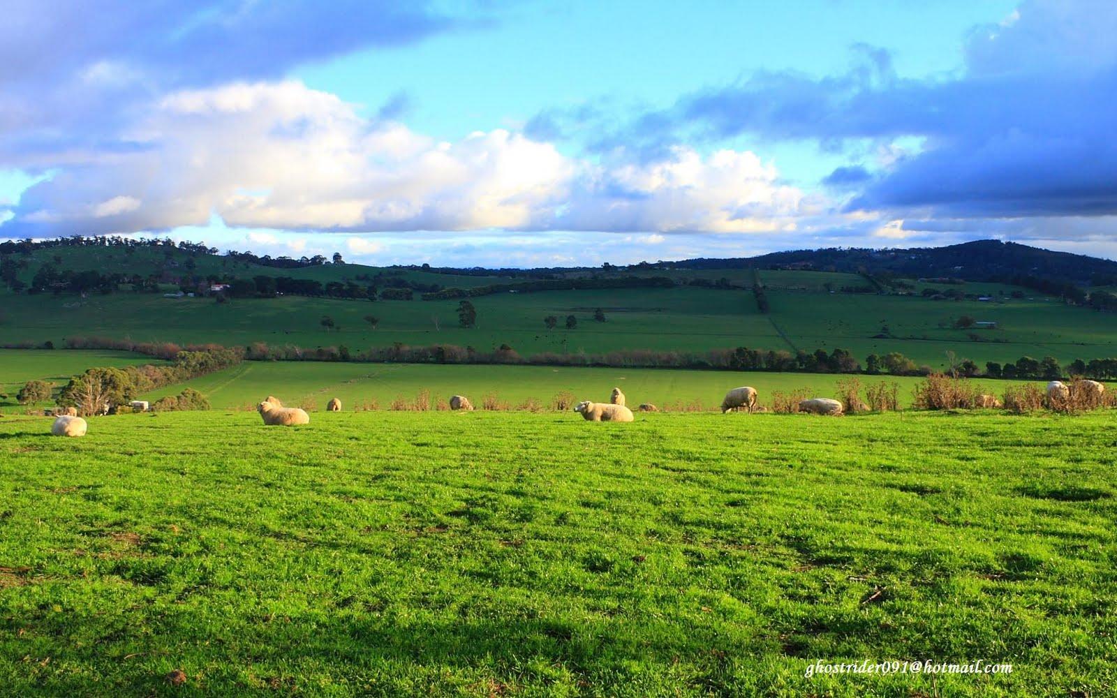 http://1.bp.blogspot.com/-h9jku-ptj68/TnrNa1NtuHI/AAAAAAAAAhg/tCGeAbRck4g/s1600/sheep-wallpaper-38-726378.jpg