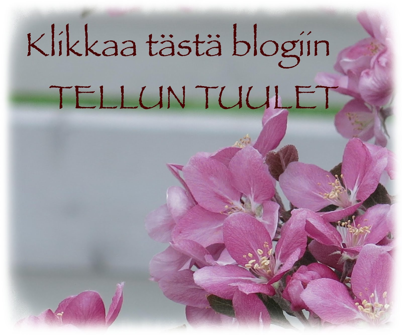 Blogiin