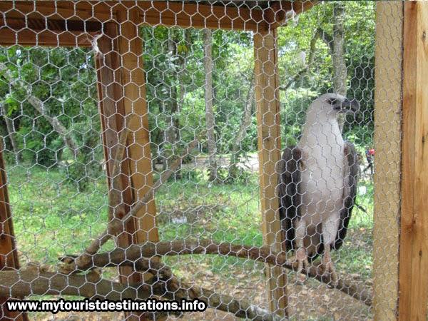 zoological garden pinnawala