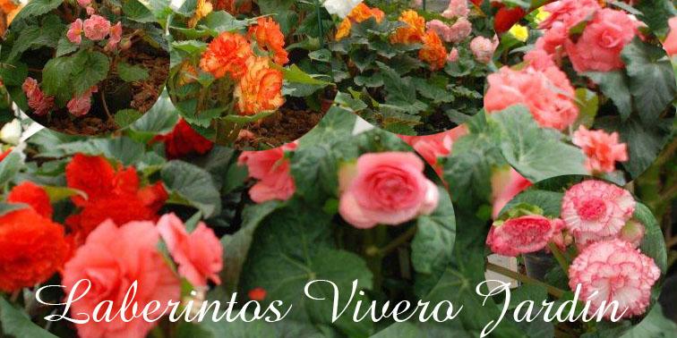 Dise o de jardines y plantas ornamentales quito for Diseno de plantas ornamentales