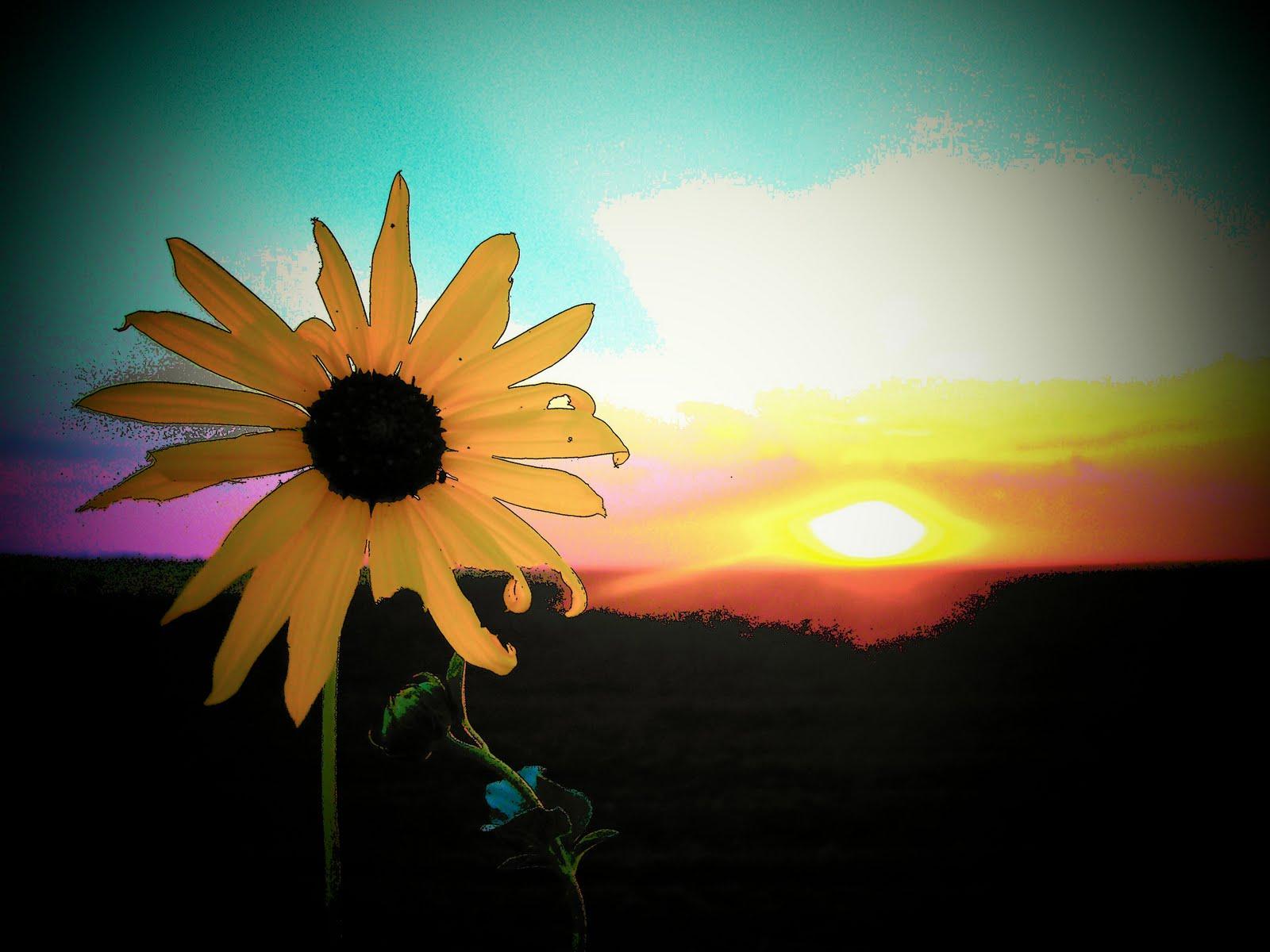 myspace flower pictures