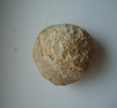 Turtle Egg Fossil