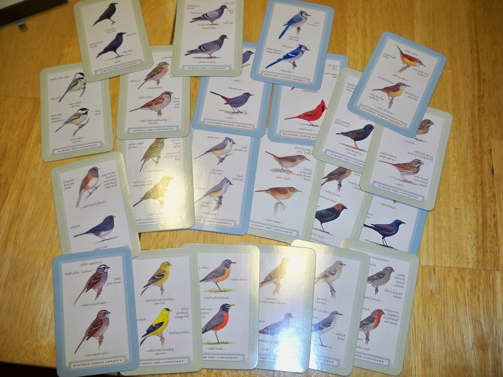the year of birds product revew sibley backyard birding flashcards