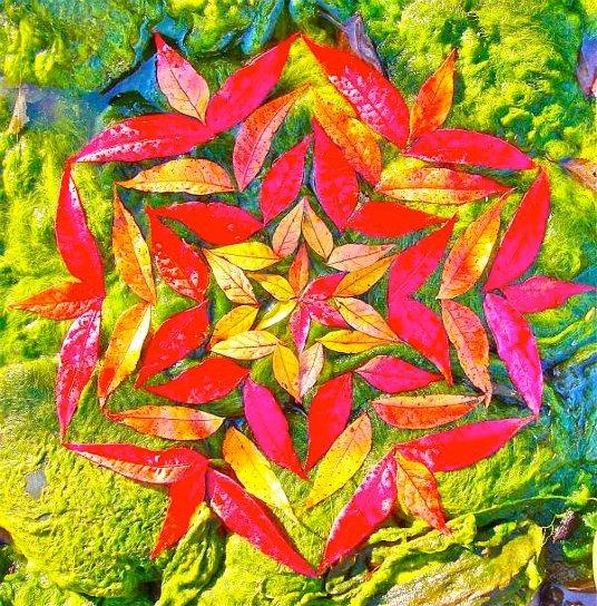 mandala hecha con hojas naturales