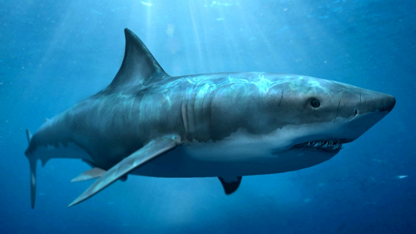 Scientists have studied megalodon teeth that were found in Africa