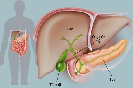 Thực phẩm dành cho người viêm gan B
