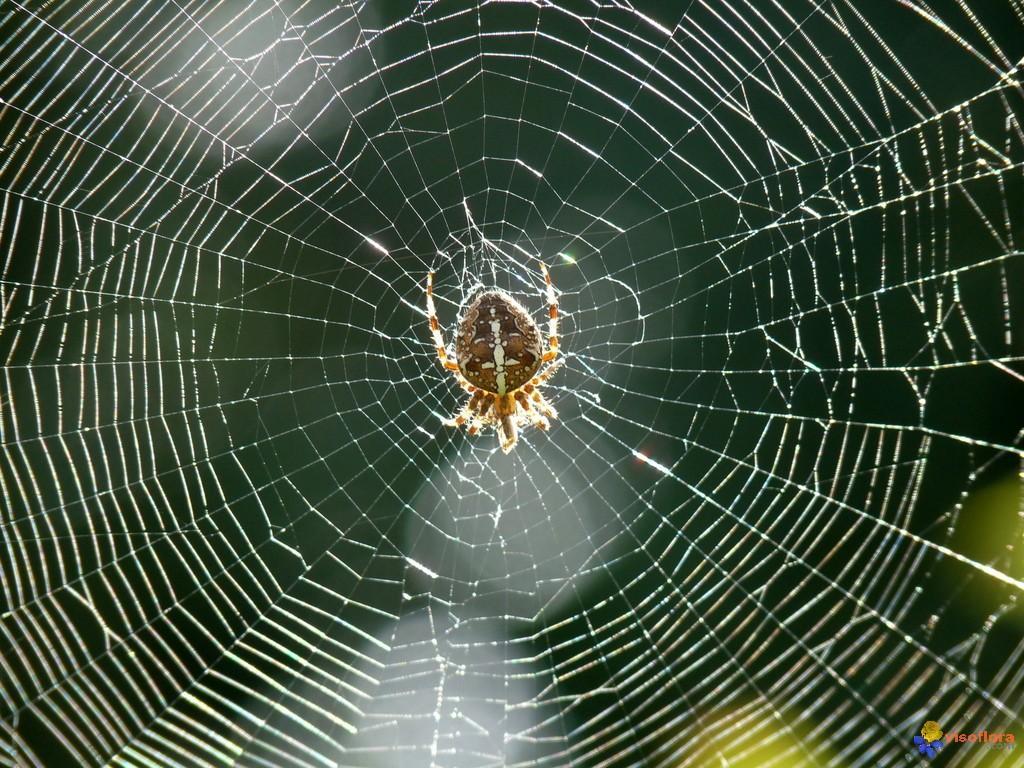 cosmos blogues 194 187 cool cool les belles toiles d araignees