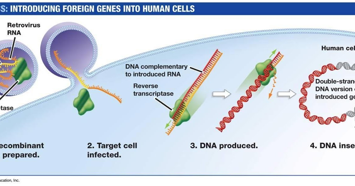 clinical use of gene therapy as an effective treatment for many incurable diseases The treatment of some diseases requires gene transfer effective gene therapy requires delivering gene therapy n treatment directed to curing genetic.