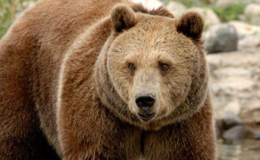 Bear Plays Trumpet, Hula Hoops, Etc.