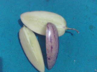 pepino ungu beras tagi