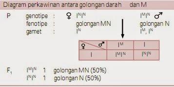 Diagram perkawinan antara golongan darah  dan M