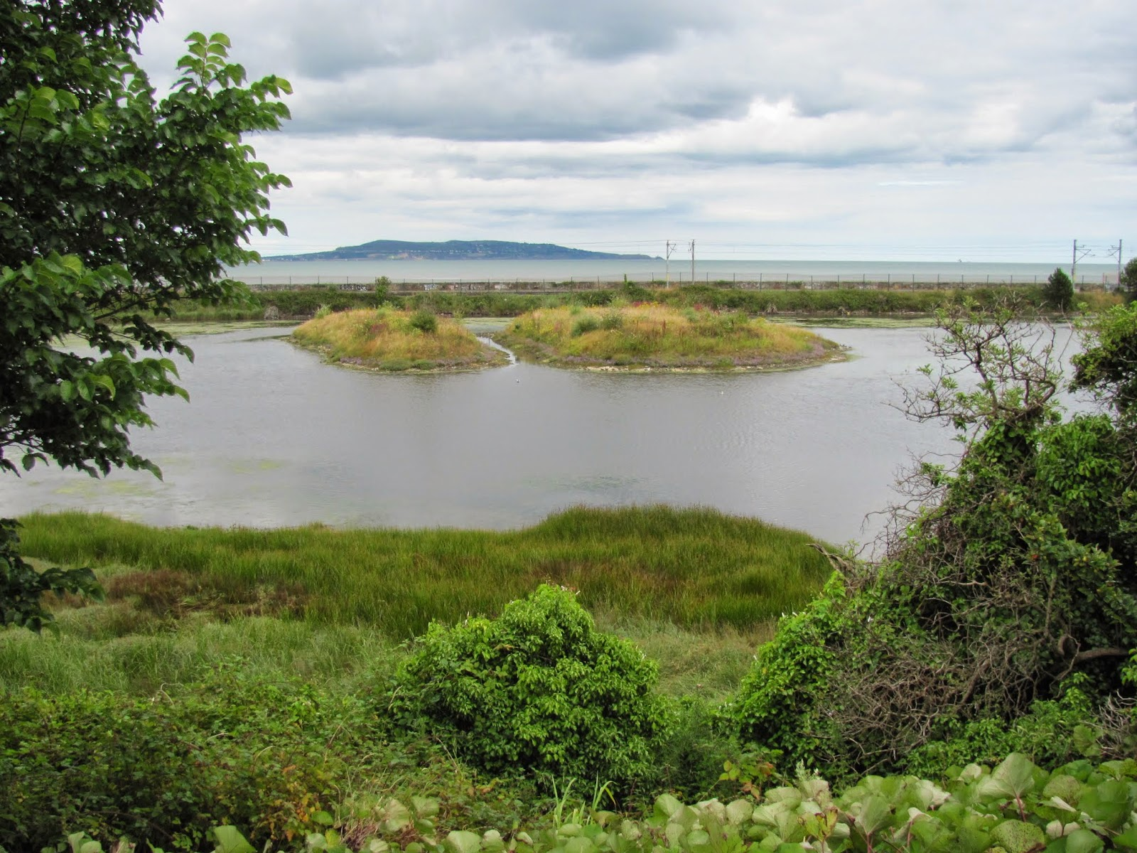 Booterstown Marsh, Howth Head in the Background Dublin, Ireland