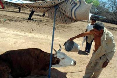 En Tarija sube en el precio de la carne por sequía