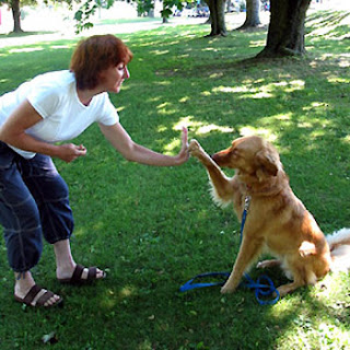 Entrenamiento canino motivo de orgullo