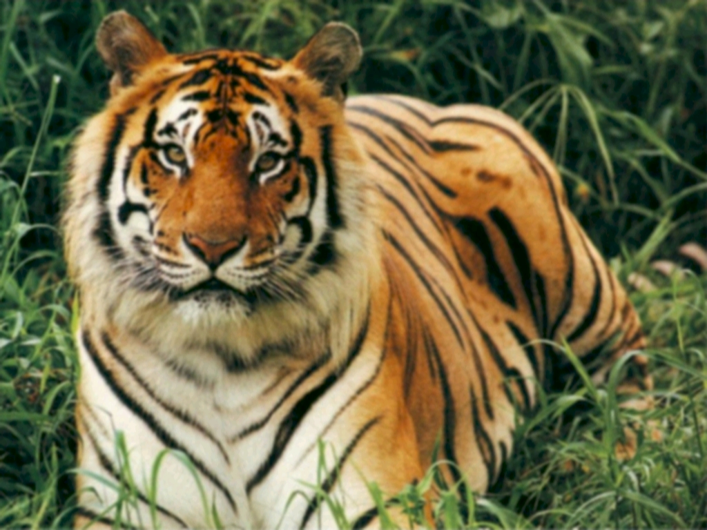 Save Tigers, Save Our National Heritage
