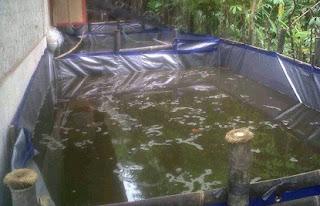 cara budidaya ikan lele di lahan sempit,air tawar yang paling menguntungkan,air tawar,jenis,hias air tawar,pengertian budidaya,air tawar pdf,proses,