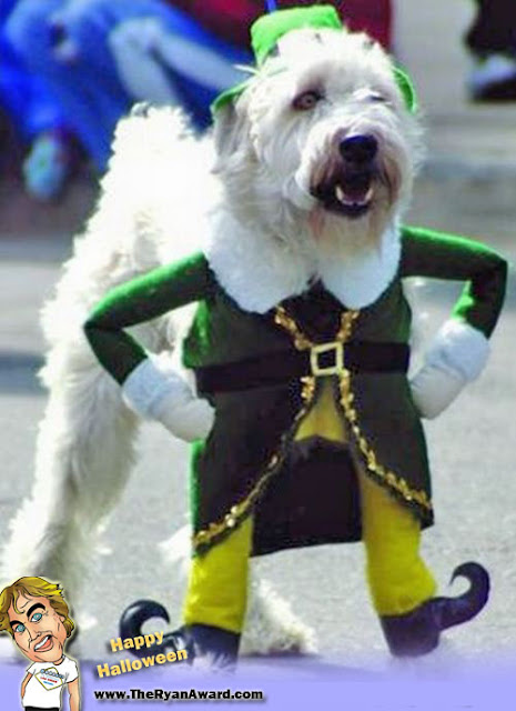 Funny Cute Leprechaun Halloween Dog Costume