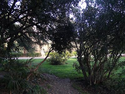 Árboles en el parque del Berro Madrid